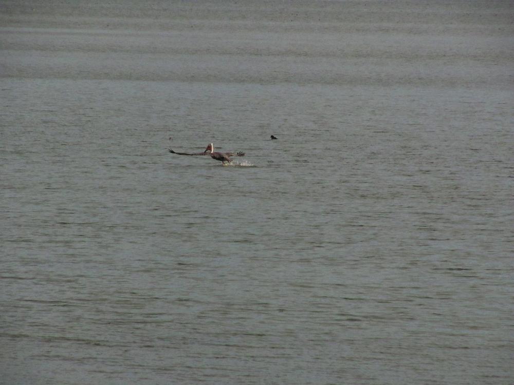 pelican Richmond Marina_edited