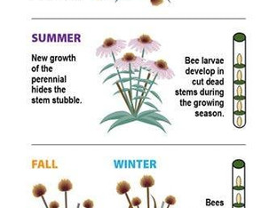 Great information about creating habitat for bees