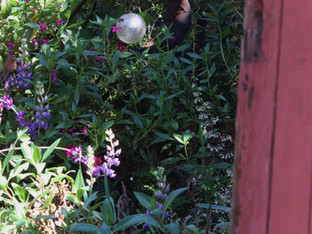 Spring blooms and secret gardens