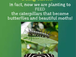 Plant to feed insects