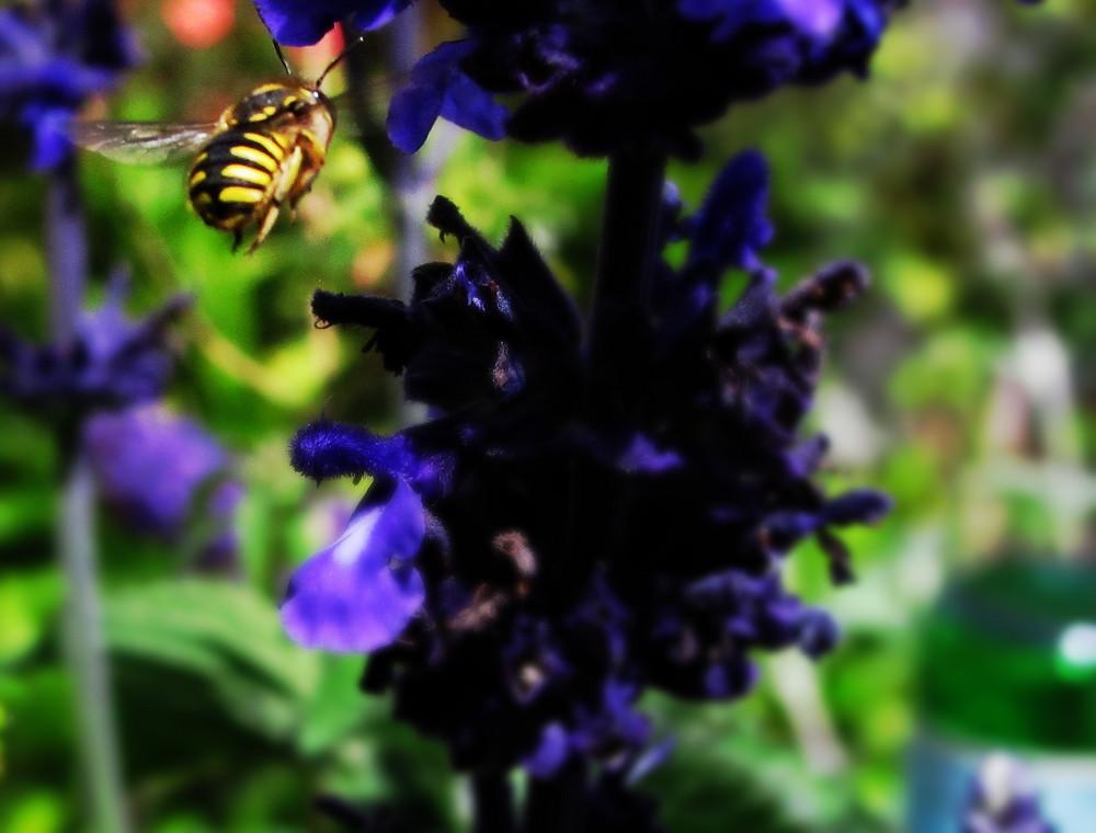 digger bee flying to dwarf indigo spire_edited_edited.JPG