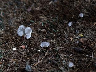 Rain and hail showers