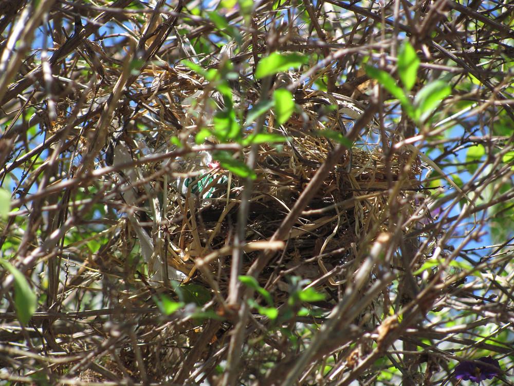 bird nest closeup