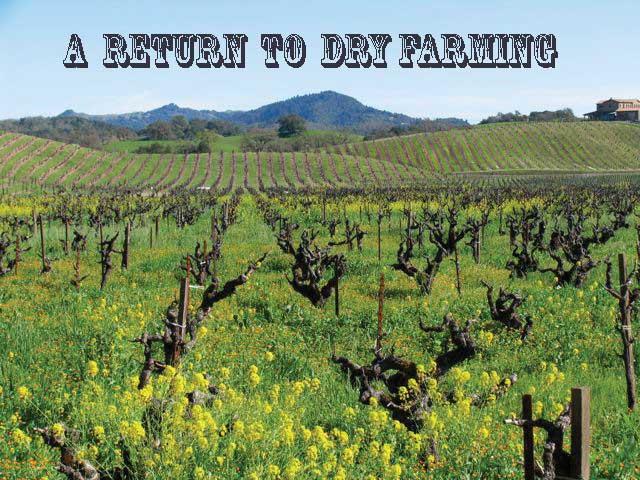 dry-farming-Sonoma.jpg