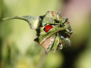 Welcome to all the ladybugs