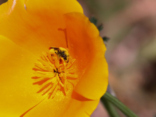 Bees and All That Pollen