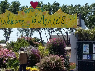 My favorite place to buy California native plants