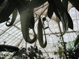 Pesky gnats and flies indoors?