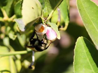 Ah, bees
