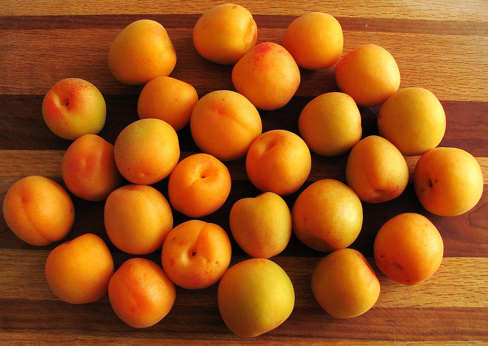 apricots from Frog Hollow farm 2_edited.JPG