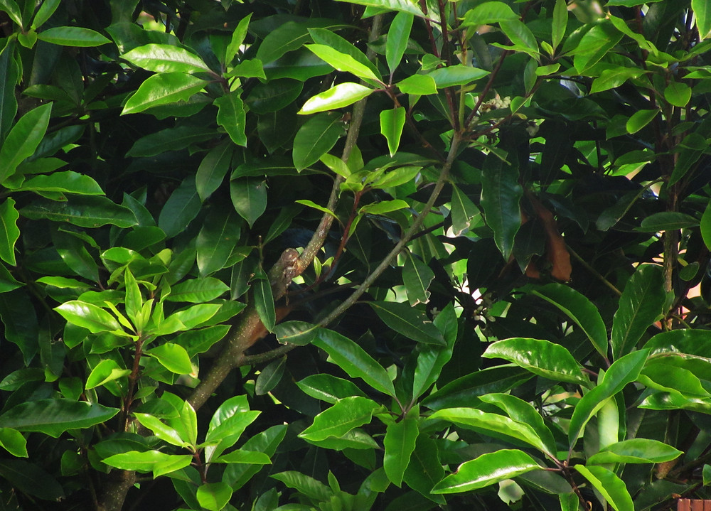 towhee nest in here_edited_edited.JPG