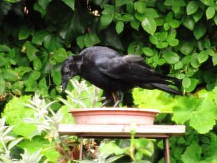 Big birds and the bath