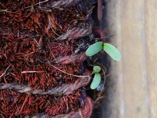 Sprouting doormat