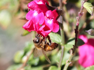 Bees in the Garden