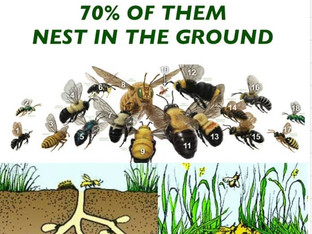Most of North America's Native Bees Nest in the Ground