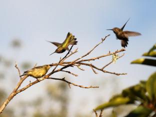 Bird Action in the Backyard