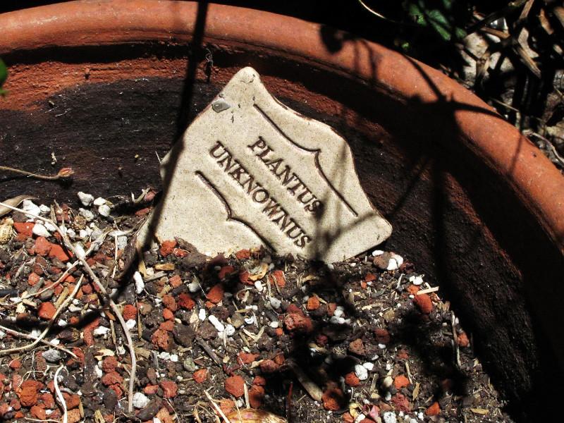 plantus unknownus plaque_edited.JPG