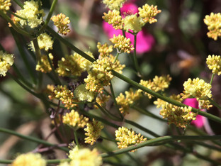 Colorful native blooms