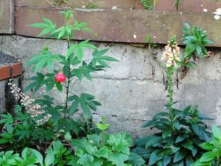 Pollinator corner