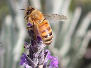 Well hello there, honey bee
