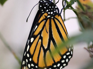 The monarchs earlier this month