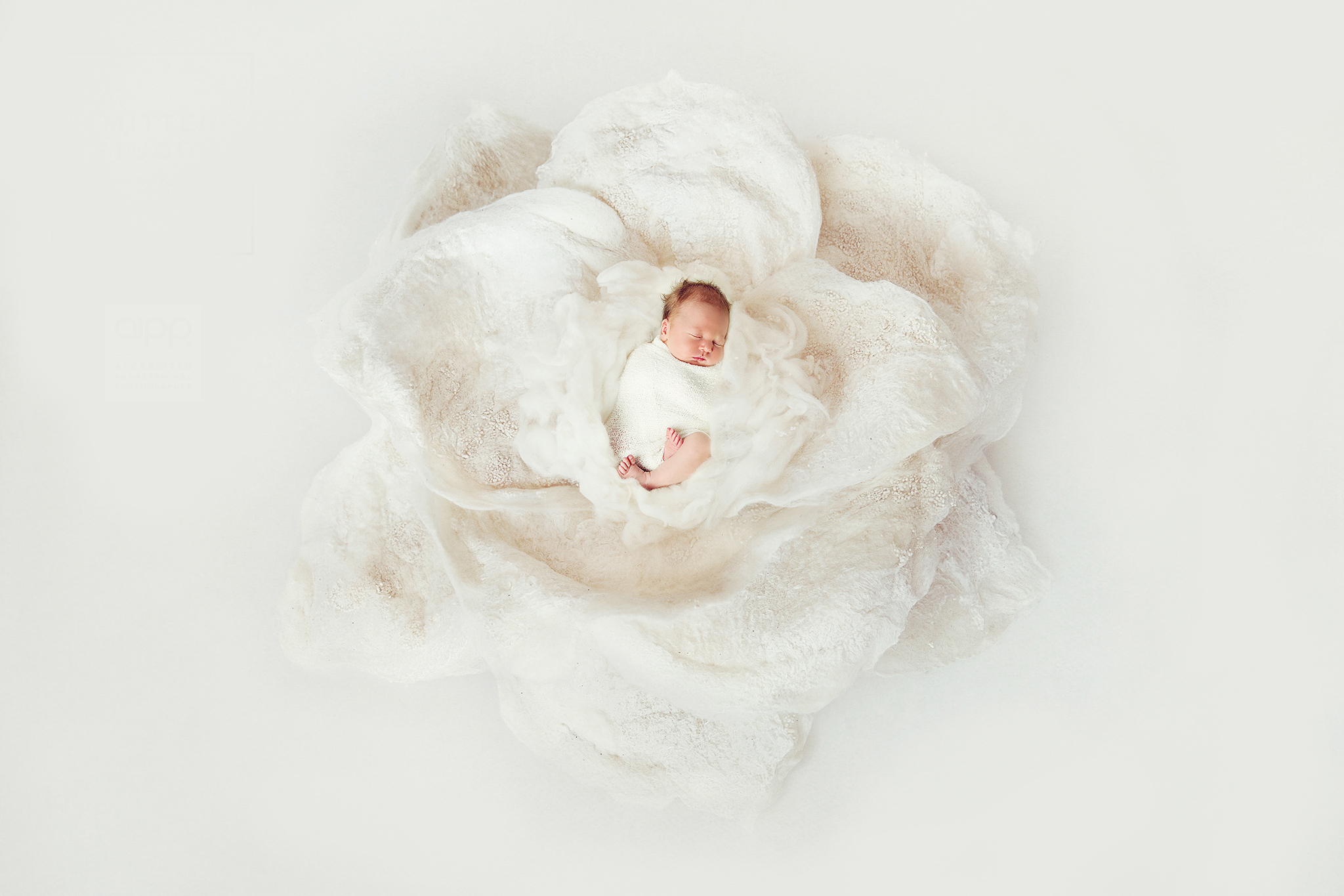 Newborn Photographer_Brisbane_4