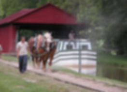 boat horses.jpg
