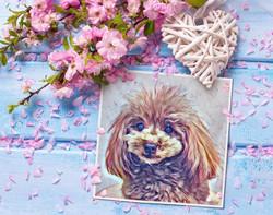 春のプレゼントお写真の一例