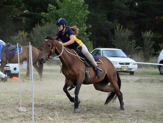 Pony Club NSW State Sporting, Campdraft, Team Penning & Polocrosse
