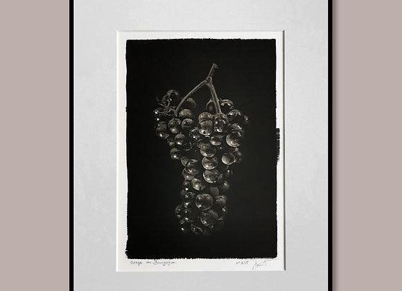 La grappe de Bourgogne