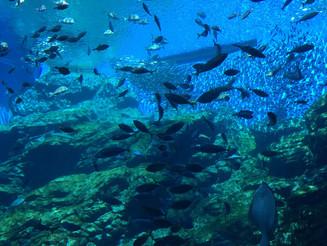 巨大水槽の中には日本屈指の漁場「三陸海岸」を再現!宮城県仙台市、仙台うみの杜水族館と三井アウトレットパーク。