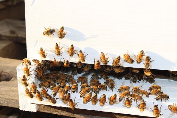 Natural Honey | Lavender Honey | New Jersey