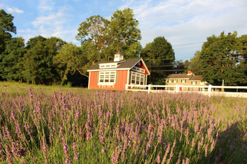 New Jersey Lavender Farm