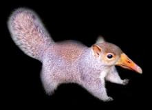 Squirrel Goose
