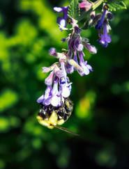 Bee #5