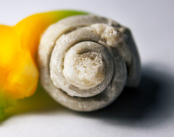 Fossilized Shell + Pepper: Spiral