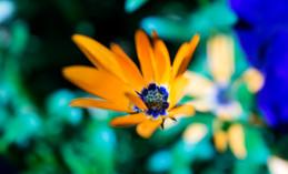 Orange + Blue Flower