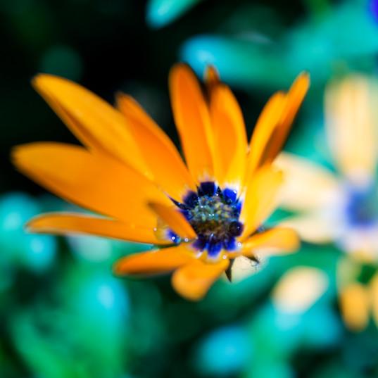 20180628_Chena River Orange Flower.jpg