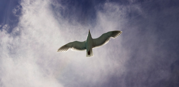 Reflected Seagull Plan (R.Sea.P)