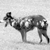 The Herd.jpg