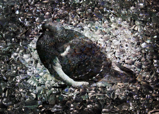 Pigeon Glass