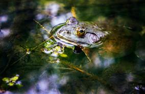 Frog #3