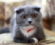 cat-2762156_1920.jpg