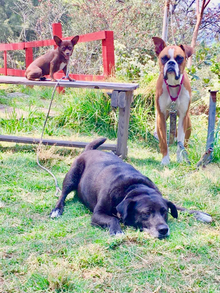 dogs are furry buddhas, zen buddhism philosphy in animals, dogs are there to listen, why you should listen to your pets, the wisdom of animals