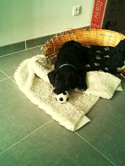 PuppyBall.png