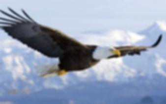 flying-eagle[2155].jpg