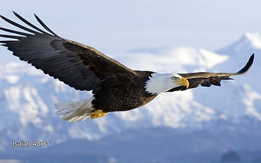 flying-eagle[2155].jpg