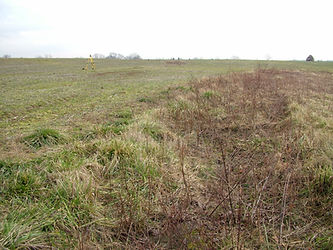 Image of a field planted with grass to protect from soil erosion; critical area planting; vegetative BMP