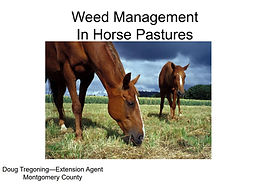 PDF: Weed Mangement in Horse Pastures. Downloadable resource from MSCD.