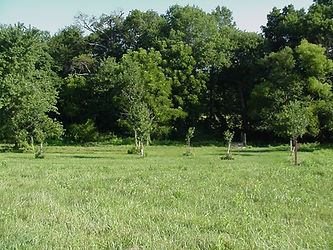 Image of a green field with a line of trees to protect from soil; riparian buffer; vegetative BMP